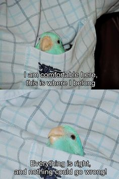 Original comedy, adorable animals, and the funniest content from the web. Funny Animal Memes, Cute Funny Animals, Cute Baby Animals, Funny Cute, Animals And Pets, Funny Memes, Funny Birds, Cute Birds, Funny Parrots