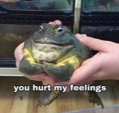 Animal Memes, Funny Animals, Cute Animals, Funny Reaction Pictures, Funny Pictures, Cute Memes, Funny Memes, Stupid Memes, Stupid Funny