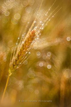 Photograph soft morning by Zsolt Varanka