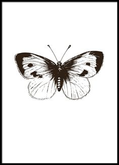 Vintage Illustration Poster with black and white illustration of a butterfly Vintage IllustrationSource : Poster mit Schwarz-Weiß-Illustration eines Schmetterlings by erweechii Black And White Posters, Black White Art, Black N White Images, Posters Vintage, Vintage Art Prints, Butterfly Illustration, Butterfly Drawing, Cabbage Butterfly, Desenio Posters