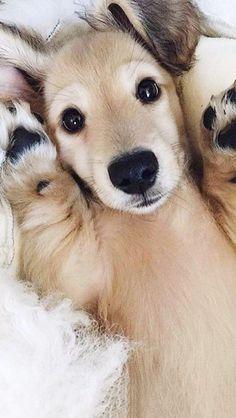 Peak-a-boo pup