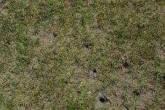 Agridea alle prese con la rigenerazione di tappeti erbosi. Fori nel terreno per arieggiare il terreno e permettere la ricrescita dell'erba. http://www.coopagridea.org/