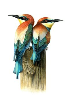 Beautiful Bird Drawings by Ankat Hermanns | Inspiration Grid | Design…
