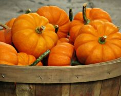 pumpkin autumn sun by Katerina on Etsy