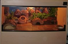 Leopard Gecko Setup - Reptile Forums