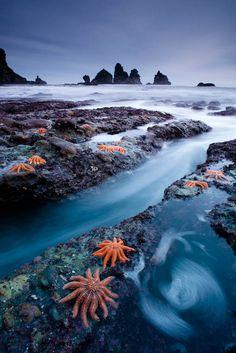 West Coast starfish colony, New zealand, by mundoview.