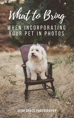 dog sitting on a chair during a family photo session Family Photos With Baby, Photos With Dog, Fall Family Photos, Fall Photos, Animal Photography, Family Photography, Photography Ideas, Fall Photo Outfits, Family Photo Sessions