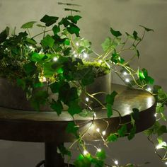 The ground-creeping ivy plants go well with fairy lights. The ground-creeping ivy plants go well wit Fairy Bedroom, Bedroom Decor, Bedroom Inspo, Wall Decor, Ivy Plants, Indoor Plants, Small Led Lights, Outdoor Fairy Lights, Indoor Lights
