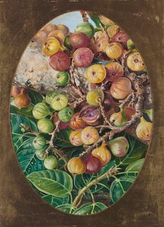 306. Foliage and Fruit of Fig Tree held Sacred by the Hindoos. Prints by Marianne North | Magnolia Box