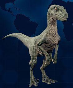 Velociraptor is an unlockable dinosaur in Jurassic World: Evolution. Velociraptor fossils are unlocked once the player has 2 Expedition Centers. Blue Jurassic World, Jurassic World Dinosaurs, Raptor Dinosaur, Dinosaur Art, Prehistoric Creatures, Mythical Creatures, Jurrassic Park, Dangerous Animals, Harry Potter Art