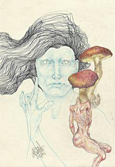 Mushrooms…..