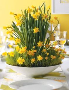 How to Make a Daffodil Centerpiece.  ..........................................................  Bring spring's bounty and color inside with this fresh and fun daffodil centerpiece.