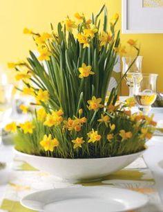 How to Make a Daffodil Centerpiece  Auf freshhomeideas.com