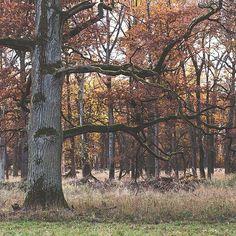 Old tree in Favorite Park Ludwigsburg  #tree #old #wald #forest #ludwigsburg #stuttgart #vsco #vintage #nature #gruselig #scarry #allein #alone #lightroom
