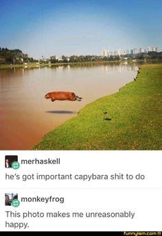 Captain Capybara to the rescue!