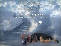 The German Shepherd Pet Loss Quotes, Dog Quotes, Animals And Pets, Cute Animals, Pet Loss Grief, German Shepherd Dogs, German Shepherds, Dog Heaven, Dog Memorial
