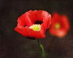 http://fineartamerica.com/featured/spring-poppies-terry-fleckney.html