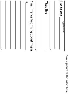 Science - Free Insect Worksheet