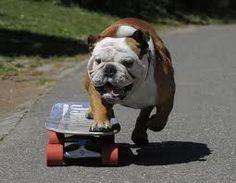 tillman bulldog - Google Search