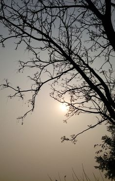 Nature pic