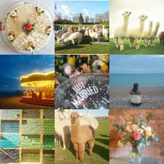 Remember we are on instagram too! @purlalpacagirl Lots of lovely photos of alpacas, yarn, knitwear and just day to day life!  The top 9 images on Instagram for @purlalpacagirl. Find out about your colour palette, what subjects your followers most like and improve your gallery with a #makelightinsights report!