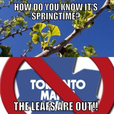 The Leafs are Out, must be spring time!
