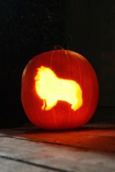 Shetland Sheepdog Sheltie Pumpkin Jack o Lantern