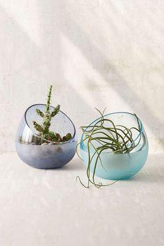 Glasbruk Glass Terrarium