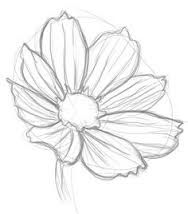 Image result for cosmos flower drawings