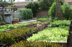 This Family Grows 6,000 Pounds Of Food A Year In Their L.A. Backyard - mindbodygreen