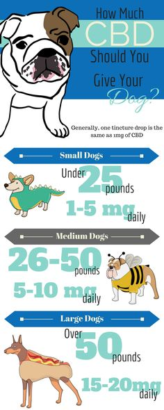 Infographic on how much CBD you should give your pet by weight.