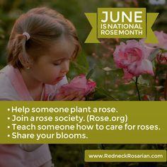"""Advocacy is defined as """"public support or a recommendation for a particular cause or policy"""". It's no secret that I have long been an advocate for roses. Whether it's travel…"""