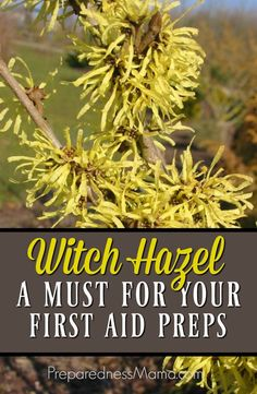 Witch hazel has many anti-properties that make is a great addition to your first aid supplies   PreparednessMama