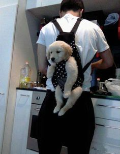Puppy-in-baby-bjorn > Would You Ever Carry Your Puppy Like This?