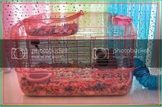 The hamster room DIY cage - Gallery Forum - Hamster Hideout Forum Cool Hamster Cages, Cool Stuff, Gallery, Room, Diy, Design, Cool Things, Bedroom, Do It Yourself
