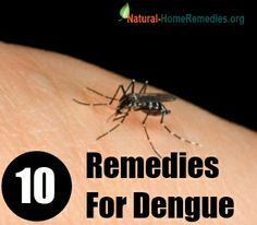 10 Natural Remedies For Dengue Fever Treatment