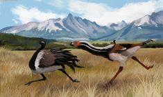 Terror Bird chasing down Hinasuri nehuensis by Jack Wood Prehistoric Wildlife, Prehistoric Creatures, Wildlife Art, Extinct Animals, Extinct Birds, Weird Creatures, Jurassic World, Mammals, Japanese Language