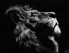 "Etched lion on scratch board - ""Hungry Eyes I"""