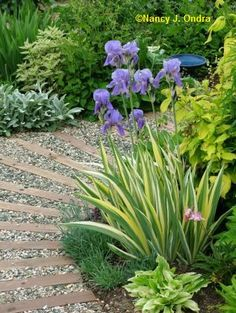 Curved wooden path in pea gravel. Will use pallets!