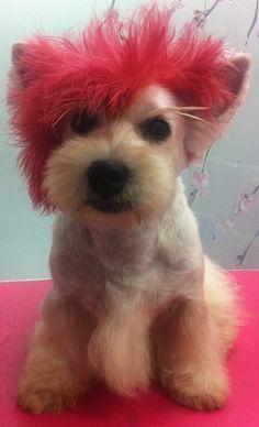Repinned-Creative Grooming - Mohawk.   Creative Dog Grooming ...