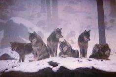 LE ORIGINI DEL MALE: Nel branco coi lupi (Esplosione Cambriana)