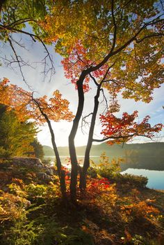 Sarah Furchner, an award-winning Wildlife and Nature Photographer from Northern Ontario, shares with us her unique perspective of Northeastern Ontario. Beautiful Forest, Beautiful World, Most Beautiful, Beautiful Places, Landscape Photography, Nature Photography, Ontario Travel, Nature Images, Travel Aesthetic