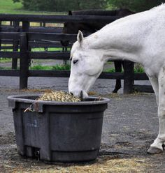 How to get started with a slow feeder for your horse!  http://www.proequinegrooms.com/index.php/tips/barn-management/slow-feeder-basics/