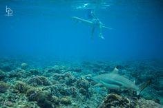 At Namotu Island Resort in Fiji. Oh, you know, a shark.