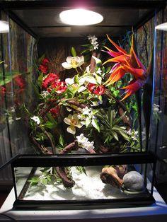 What& in my White& Tree Frog Setup (Picture Heavy) - Reptile Forums treefrogterrarium Chameleon Terrarium, Tree Frog Terrarium, Gecko Terrarium, Terrariums, Reptile House, Reptile Room, Cute Reptiles, Reptiles And Amphibians, Tarantula Habitat