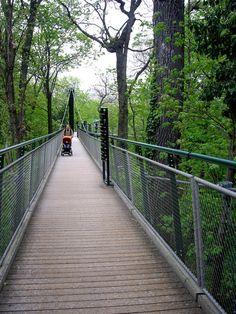 Картинки по запросу шенбрунн зоопарк мост