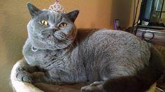 21 Grumpy Pets That Still Look So Cute