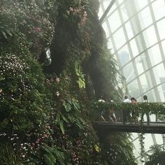 T h e c o l l e c t o r lush aesthetic, aesthetic plants, aesthetic green, Diy Nature, Plant Aesthetic, Aesthetic Green, Lush Aesthetic, Plants Are Friends, Jurassic Park, Conservatory, Mother Nature, Greenery