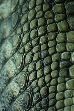 ˚Scutes Crocodile Skin - I love the idea of mounting this onto glass and then using it as a table and lighting it from underneath with green and blue lights.