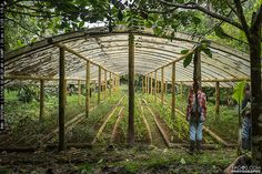Plant Nursery Structure Build With Giant Bamboo, Ecuador